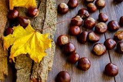 成熟栗子在秋天,室外射击,顶视图 免版税库存照片