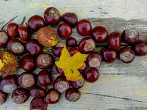 成熟栗子在秋天,室外射击,顶视图 库存图片