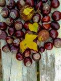 成熟栗子在秋天,室外射击,顶视图 库存照片