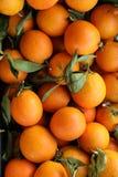成熟桔子背景 免版税图库摄影