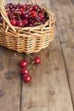成熟樱桃一个大篮子  可口和甜莓果 木背景,文本的自由空间 减速火箭的样式 复制空间 库存图片