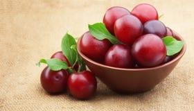 成熟樱桃的李子 库存照片