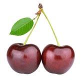 成熟樱桃 免版税库存照片