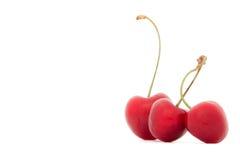 成熟樱桃 库存照片