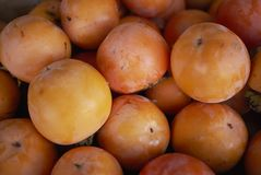 成熟橙色亚洲柿树 图库摄影