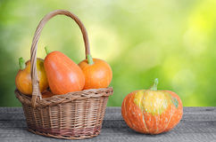 成熟橙色南瓜 库存图片