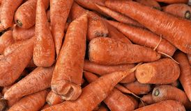 成熟橙色红萝卜 库存图片