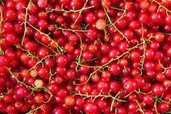 成熟水多的红浆果莓果背景  库存照片