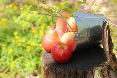 成熟水多的红色苹果和梨收获在一个桶在防止发酵过度 免版税库存照片