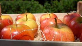 成熟水多的红色苹果在一个木箱在 股票视频