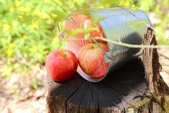 成熟水多的红色苹果收获在一个桶的在nat的一个树桩 免版税库存图片