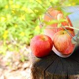 成熟水多的红色苹果收获在一个桶的在nat的一个树桩 库存图片