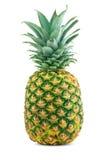 成熟水多的菠萝 图库摄影