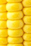 成熟玉米五谷与水滴/极端宏观纹理的 库存照片