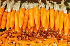 成熟玉米棒子 免版税库存照片