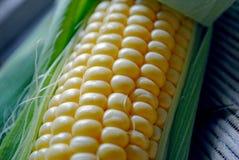 成熟玉米谷物 库存照片