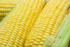 成熟玉米谷物 免版税库存图片