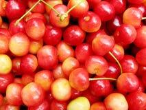成熟甜樱桃 免版税库存照片