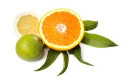成熟的柑橘水果 免版税库存照片