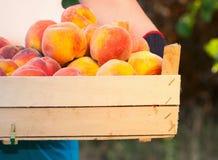 成熟的桃子 库存照片