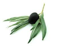 成熟的橄榄 图库摄影