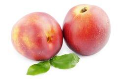 成熟的油桃 库存图片