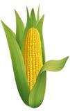 成熟的玉米 皇族释放例证