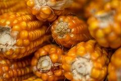 成熟的玉米 图库摄影
