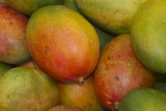 成熟的芒果 免版税图库摄影