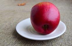 成熟的苹果计算机大红色在一块白色板材 关闭 免版税库存图片