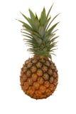 成熟的菠萝 免版税库存照片
