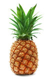 成熟的菠萝