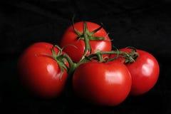 成熟的蕃茄藤 免版税库存图片