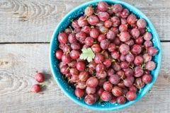 成熟的鹅莓 免版税库存照片