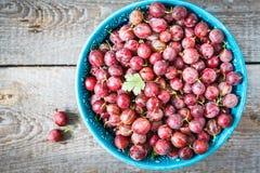 成熟的鹅莓 库存图片