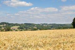 成熟的麦子,克勒兹省,利姆辛,法国的领域 免版税图库摄影