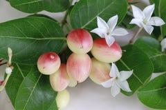成熟的Karanda,明亮的红色,可口,芒果,赤柏松,石灰,煮沸,安置在一块白色板材 库存照片