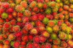 成熟红毛丹普遍的水多的甜热带水果服务  免版税库存照片