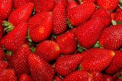 成熟红色新近地收获了草莓 免版税库存照片