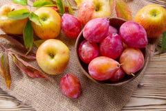 成熟红色苹果和李子 免版税库存照片