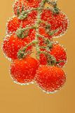 成熟红色西红柿 库存图片