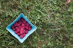成熟红草莓 免版税库存图片