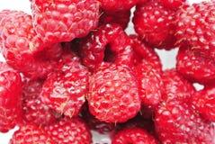 成熟红草莓 免版税库存照片