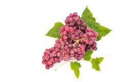 成熟红葡萄 与在白色backgro隔绝的叶子的桃红色束 免版税图库摄影