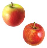 苹果。 苹果绿,黄色和红色。 图库摄影