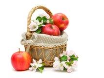成熟苹果和苹果花在一个篮子在白色背景 库存图片