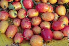 成熟苹果的螃蟹 图库摄影