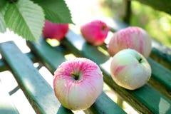 成熟苹果的长凳弄湿了 免版税库存图片