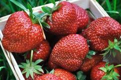 成熟草莓特写镜头 免版税库存图片