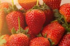 成熟草莓特写镜头视图 免版税图库摄影